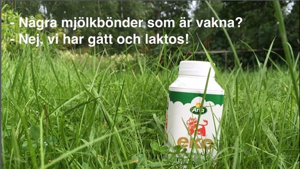 Ordvits